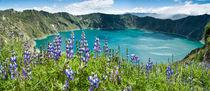 Lake Quilotoa caldera, lupine flowers, Ecuador von Tom Dempsey