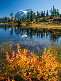 Orange leaves. Picture Lake reflects Mt Shuksan, Washington.  by Tom Dempsey