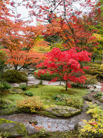 Japanese maple, fall garden stream, Seattle by Tom Dempsey