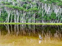 Tidal River, bird, Wilson's Promontory, Australia von Tom Dempsey