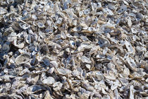 Shucked Oyster Shells von agrofilms