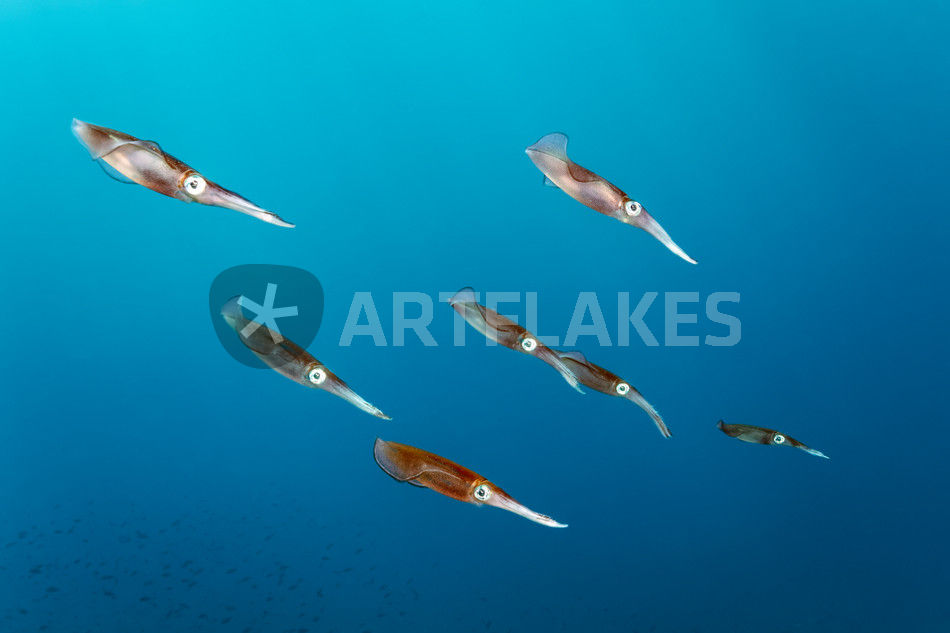"""""""squid squadron ii"""" fotografie als poster und kunstdruck"""