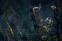 Licht und Schatten in der Natur by Rainer Golembiewski