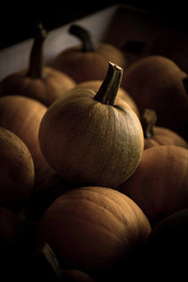 Pumpkin In The Dark von agrofilms