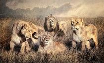 Serengeti Lions by Brian Tarr