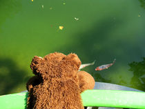 Fischflüsterer by Olga Sander