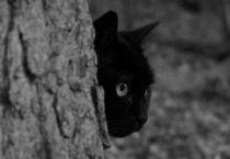 Katze im Wald by Johanna Leithäuser