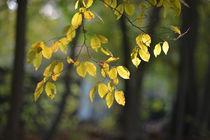 das Licht und der Herbst by Rainer Golembiewski