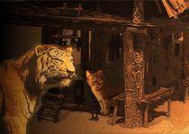 Rotbart auf Sumatra by Wolfgang Schwerdt