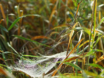Gespinst mit Tau, Weave with morning dew by Sabine Radtke