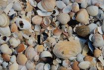 Muscheln von sk-photoart
