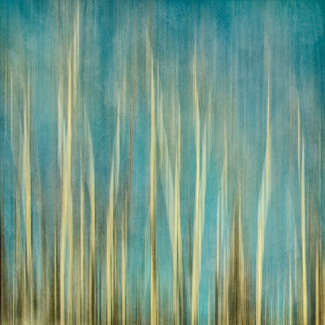 Treesabstract