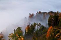 Misty autumn by Olha Rohulya