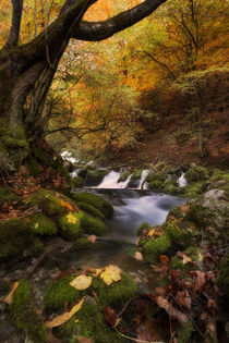 autumn creek IV by Bor Rojnik