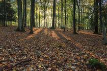 Autumn Morning by David Tinsley