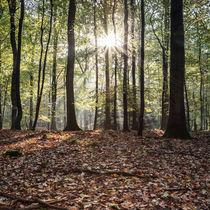 Autumn Sunbeams von David Tinsley