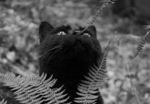 Katze im Wald von Johanna Leithäuser