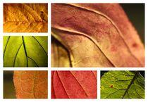 Herbstblätter von Johanna Leithäuser