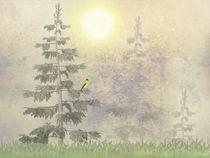 American Goldfinch Morning Mist by David Dehner