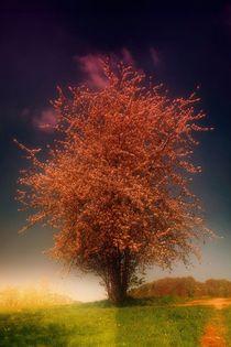 Magic Tree von mario-s