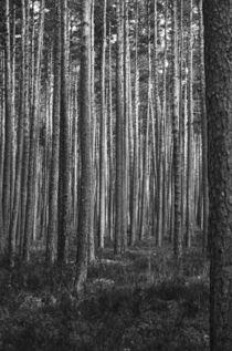 Wald #12 von Erik Müller