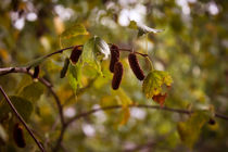 Herbst by sylbe