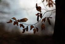 ... herbst ... by Rainer Golembiewski