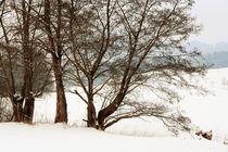 Auf dem Winterwanderweg. by pichris