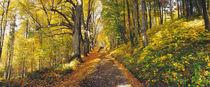 Herbst von Steffen Grocholl
