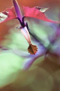 Img-flora-wie-gemalt-ii-braun