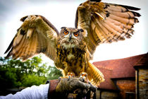 Falconer's Owl by Gabriela Wernicke-Marfo
