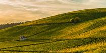 Goldener Herbst im Weinberg von Erhard Hess