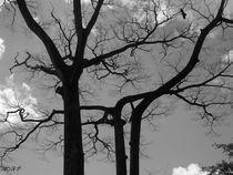 Leafless von Olamide Adeosun