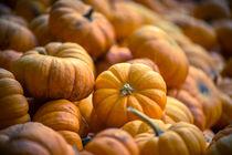 Mini Pumpkins by agrofilms