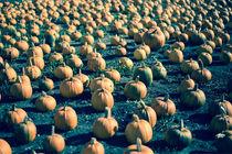 Pumpkin Farm by agrofilms