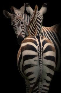 Zwei Zebras von Horst Gömmel