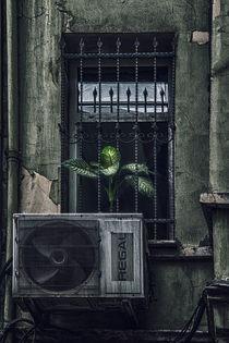 Little Shop Of Horrors von Horst Gömmel