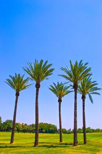 Palm trees by slavamalai