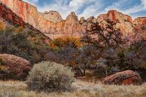 Zion National Park, Utah, USA von Douglas Pulsipher