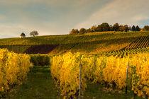 Weinlesezeit von Erhard Hess