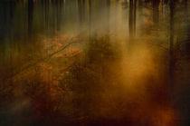 Waldlichtung von Katharina Kabara