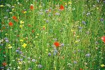Grasses by Henning Hollmann