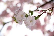Blütenzauber by Sarah-Isabel Conrad