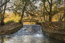 Autumn Brook by David Tinsley