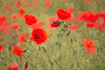 Poppies von David Pringle