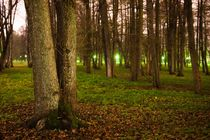 Trees by Tanel Teemusk