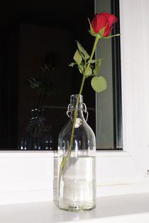 Rosa, Flasche, Glas von lewin