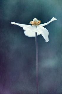 Innocence by Priska  Wettstein
