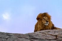 The Lion King - El Rey León von Víctor Bautista