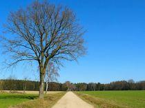 Ein Hauch von Frühling by gscheffbuch